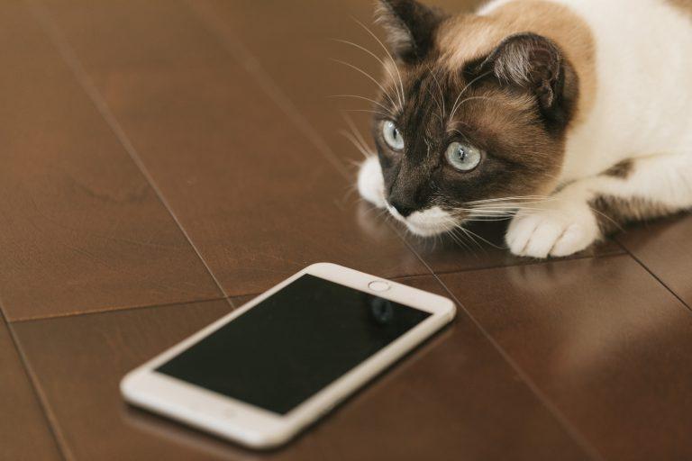 集中力を途切れさせないためにやっておくべきiPhoneの通知設定